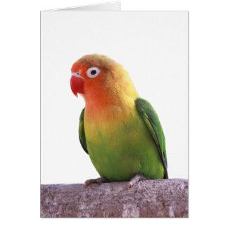ルリゴシボタンインコの優良製品 カード