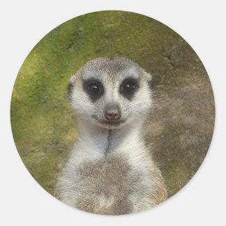 02_rd drôle de Meerkat 002 Sticker Rond