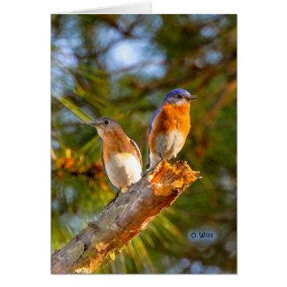 040 matte de la carte de note de cour d'oiseau