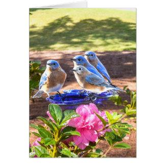 050 d'oiseaux bleus matte de la carte de note pour