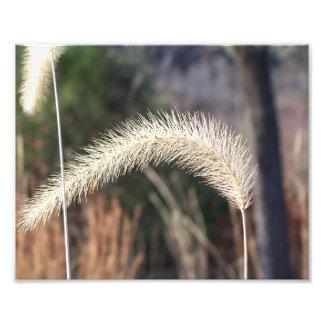 "10"" x 8"" photographie d'herbe de marais"