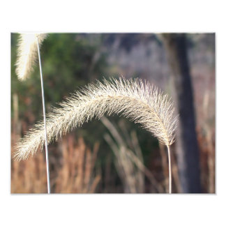 "14"" x 11"" photographie d'herbe de marais"