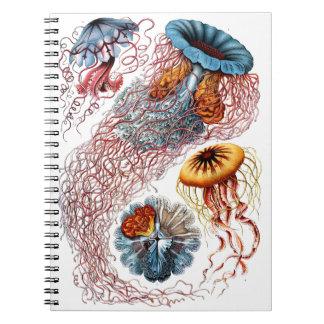 1904 formes d'art de méduses de copie de nature carnet