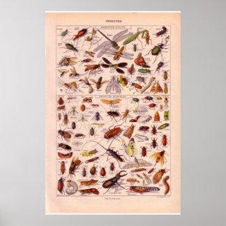 1920 insectes historiques   vintages posters