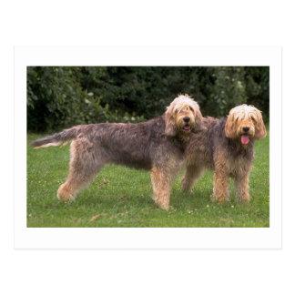 2 otterhounds full.png carte postale