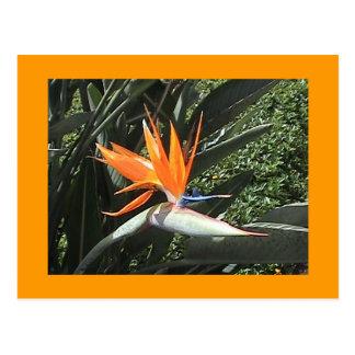 2ème Oiseau de carte postale de paradis
