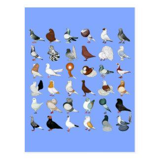 36 races de pigeon cartes postales
