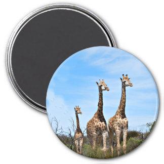 3 girafes magnet rond 7,50 cm