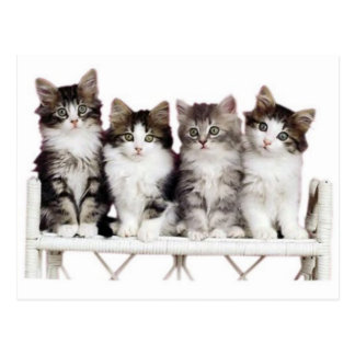 4 kittiens sur un banc carte postale
