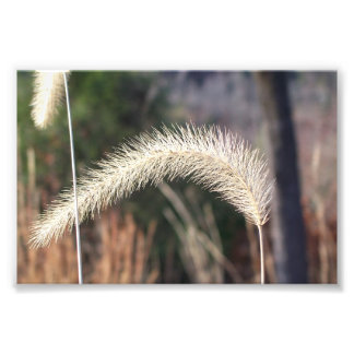 "6"" x 4"" photographie d'herbe de marais"