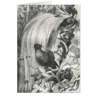 A.E. Brehm - oiseaux du paradis Carte De Vœux