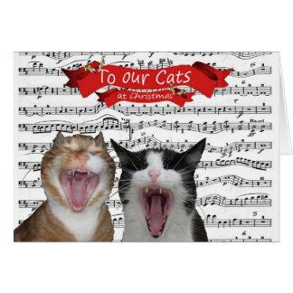 À nos chats carte de vœux