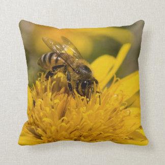 Abeille africaine de miel avec l'alimentation de coussin