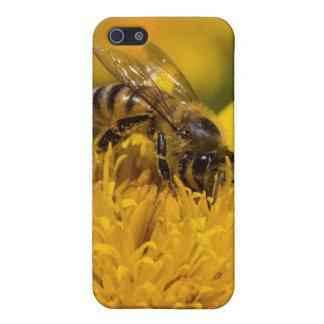 Abeille africaine de miel avec l'alimentation de étuis iPhone 5