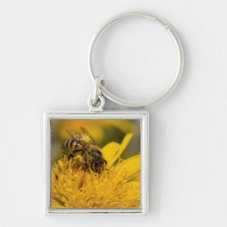 Abeille africaine de miel avec l'alimentation de porte-clé carré argenté