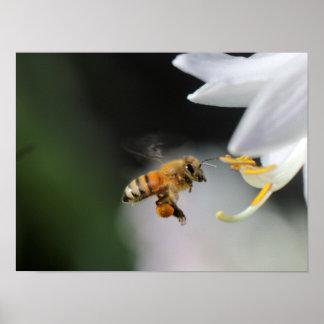 Abeille de miel posters