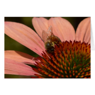 Abeille de miel sur la carte de voeux de