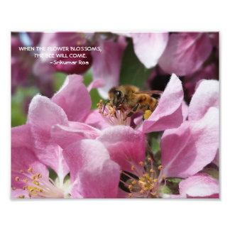 Abeille de miel sur la fleur de Crabapple avec la Impression Photo