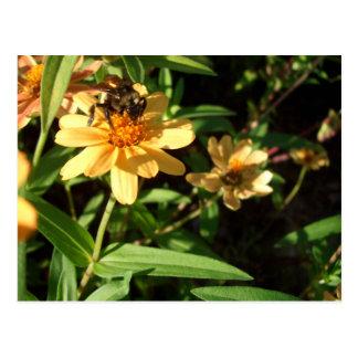 Abeille du jour d'été sur les fleurs jaunes cartes postales