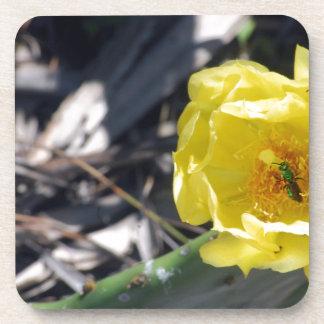 abeille iridescente sur la fleur de nopales dessous-de-verre