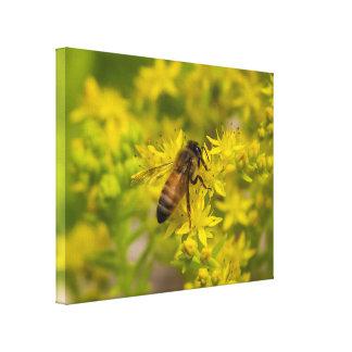 Abeille jaune Maleny 2016 de fleur et de miel Toile