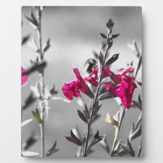 Abeille noire et blanche plaque photo