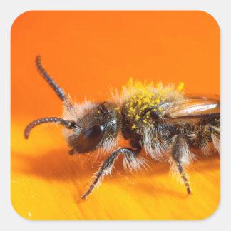 Abeille pollinisant une fleur sticker carré