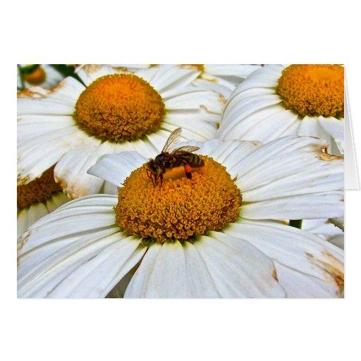 abeille sur la fleur cartes de vœux