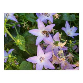 Abeille sur une fleur cartes postales