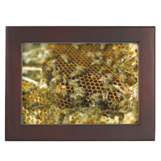 Abeilles dans la ruche, le Cap-Occidental, Afrique Boîtes À Souvenirs