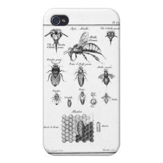 Abeilles et nid d'abeilles antiques coque iPhone 4/4S