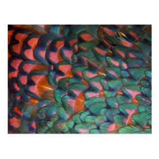 Abrégé sur coloré plumes de faisan carte postale