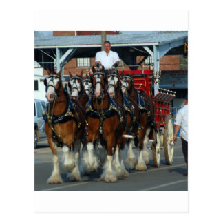 Accroc de cheval de Clydesdale 6 Carte Postale