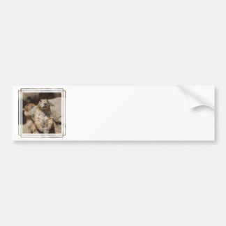 Adhésif pour pare-chocs frais de chien de prairie adhésif pour voiture