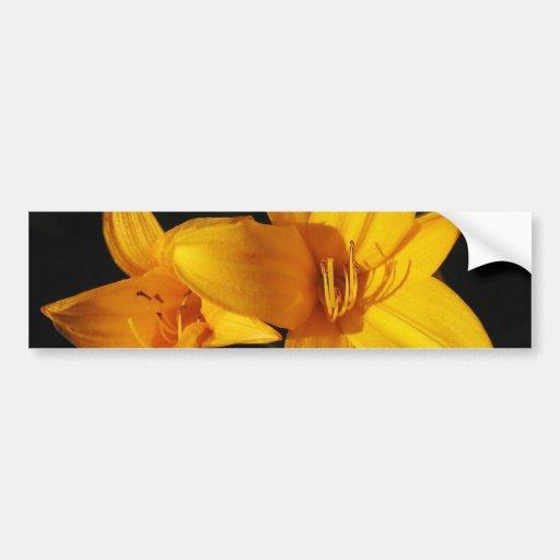 Adhésif pour pare-chocs jaune d'orchidée autocollants pour voiture