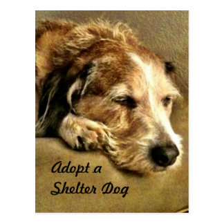 Adoptez une carte postale de chien