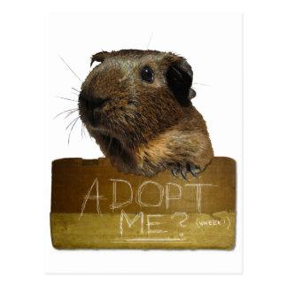 Adoption de délivrance de cobaye carte postale