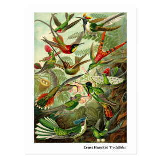 Adresse de colibris de Trochilidae d'Ernst Haeckel Carte Postale