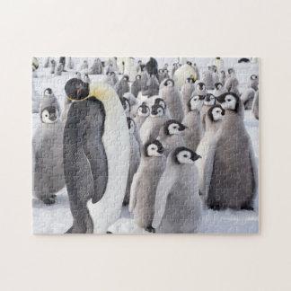 Adulte de pingouin d'empereur avec des poussins puzzle