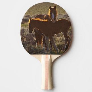 Adulte et colt sauvages de caballus d'Equus de Raquette De Ping Pong