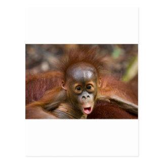 Affaires de singe 1 carte postale
