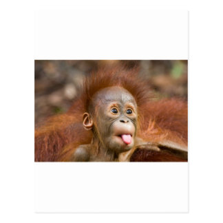 Affaires de singe 2 carte postale