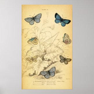 Affiche bleue vintage de papillons posters