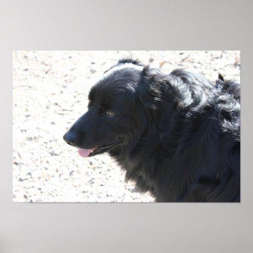 affiche brillante de chien noir