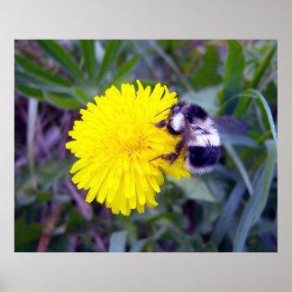 Affiche brouillée d'abeille posters