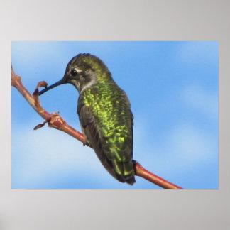 Affiche--Colibri vert Poster