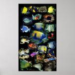 Affiche colossale finale de taille de ReefFish