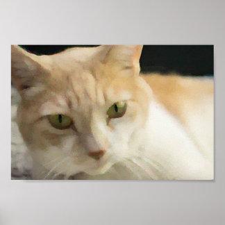 Affiche crème de valeur de chat tigré posters