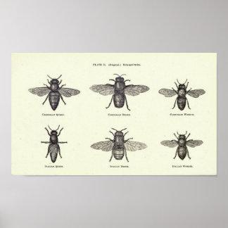 Affiche d'abeilles de miel posters