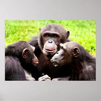 Affiche d'affaires de singe